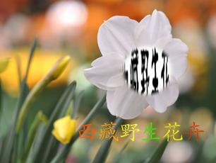 封面设计(9.5结束)_2937508_k68威客网